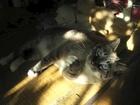 夏のピークを感じるジャンくん 元野良猫の保護里親記録  Jean, a former stray cat.