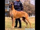 Top Ten Most Dangerous Dogs of World