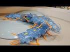 TAMIYA Centipede Robot タミヤ ムカデロボット工作セット