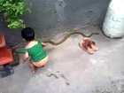 Little baby is playing with dangerous snake at home